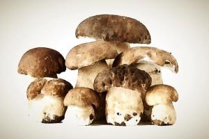 Alla scoperta dei funghi